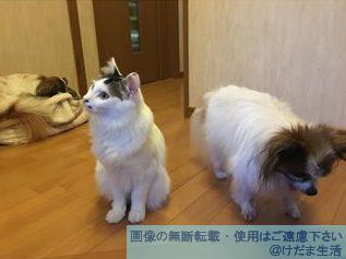 集合写真 犬 猫