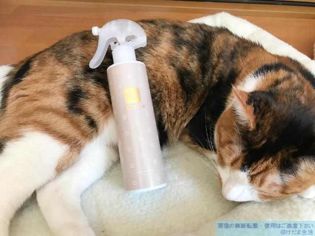 猫の顎に黒いカサブタ?猫ニキビの治し方【とらじの場合】