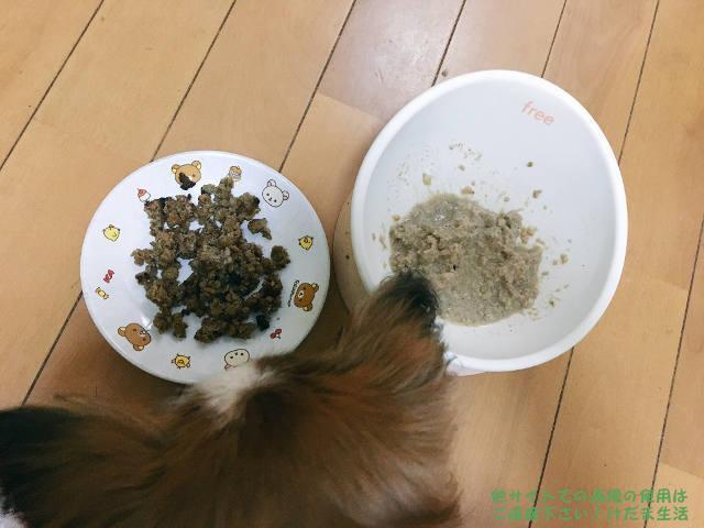 犬がご飯を食べない。老犬だから仕方ないとはいえ…色々対策迷走中