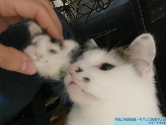 羊毛フェルト・猫の作り方(リアル)。猫毛も混ぜて作っちゃおうの巻