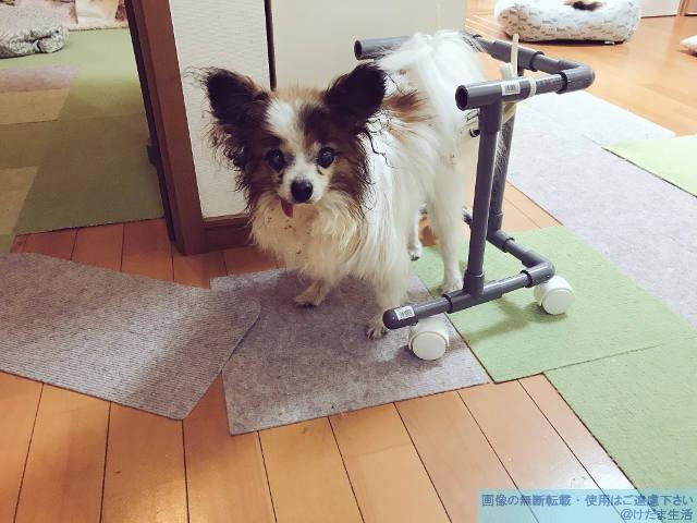 犬 歩行 器
